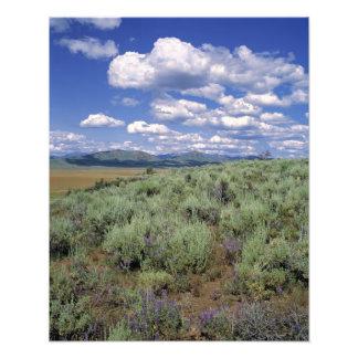 Los E.E.U.U., Idaho, Sagebrush de Camas Co. y lupi Fotografía