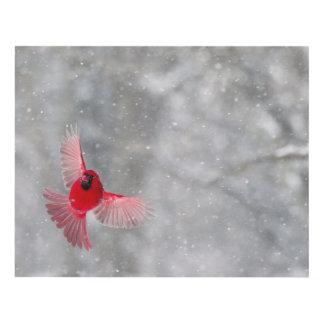 Los E.E.U.U., Indiana, Indianapolis. Un cardenal