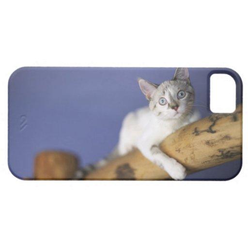 Los E.E.U.U., Iowa, retrato del gatito joven iPhone 5 Case-Mate Carcasa