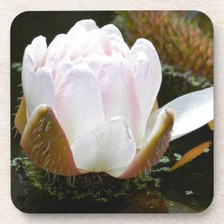 Los E.E.U.U., Kansas, floración rosa clara de Posavaso