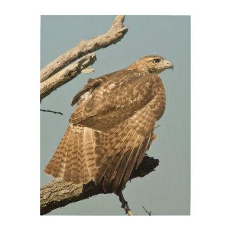 Los E.E.U.U., Kansas, rojo ataron el halcón Cuadro De Madera