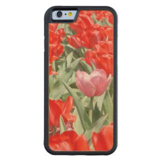 Los E.E.U.U., Kansas, tulipanes rojos con un Funda De iPhone 6 Bumper Arce