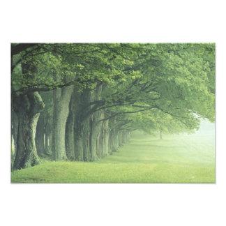 Los E.E.U.U., Kentucky. Fila de árboles en primave Fotografías