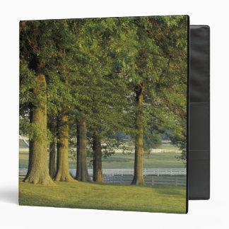 "Los E.E.U.U., Kentucky, Lexington. Fila de árboles Carpeta 1 1/2"""