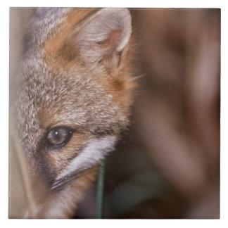 Los E.E.U.U., la Florida, Fox del pantano Azulejo Cuadrado Grande