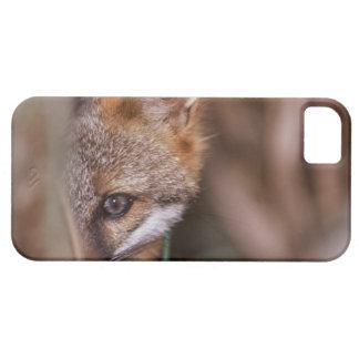 Los E.E.U.U., la Florida, Fox del pantano iPhone 5 Carcasas