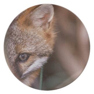 Los E.E.U.U., la Florida, Fox del pantano Plato De Comida