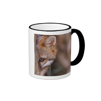 Los E.E.U.U., la Florida, Fox del pantano Taza De Dos Colores