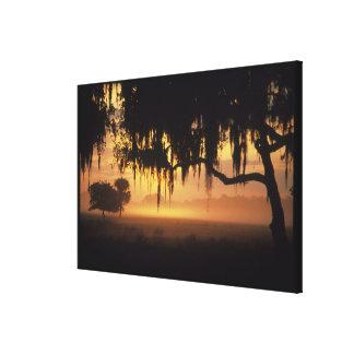 Los E.E.U.U., la Florida, lago Kissimmee. Silueta  Impresión En Lona