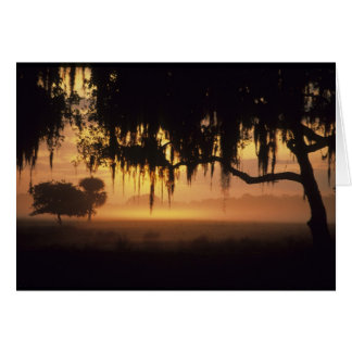 Los E.E.U.U., la Florida, lago Kissimmee. Silueta  Felicitación