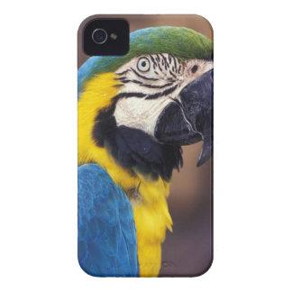 Los E.E.U.U., la Florida. Macaw iPhone 4 Fundas