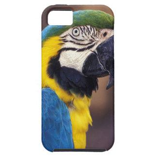 Los E.E.U.U., la Florida. Macaw iPhone 5 Carcasas