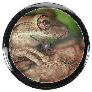 Los E.E.U.U., la Florida, rana de árbol cubana Reloj Pecera