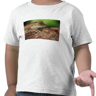 Los E.E.U.U., la Florida, rana de árbol cubana Camisetas