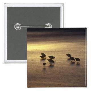 Los E E U U la Florida Sanderlings Pin