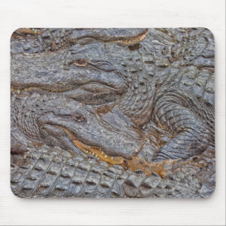 Los E.E.U.U., la Florida, St Augustine, cocodrilos Tapete De Ratón