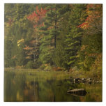 LOS E.E.U.U.; Maine; Acadia NP. Reflexiones de la  Tejas