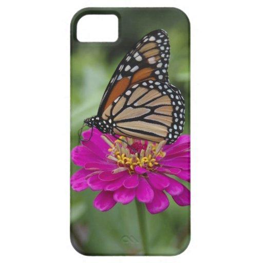 Los E.E.U.U., Massachusetts, Boylston, colina de l iPhone 5 Case-Mate Protector