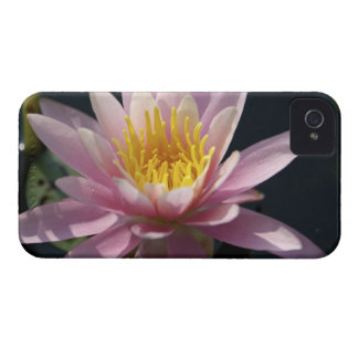 Los E.E.U.U., Massachusetts, gran Barrington, cojí Case-Mate iPhone 4 Cárcasa