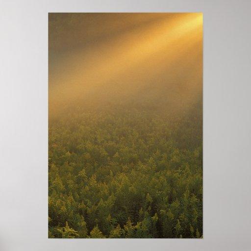 Los E.E.U.U., Michigan, prado de plantas amarillas Póster