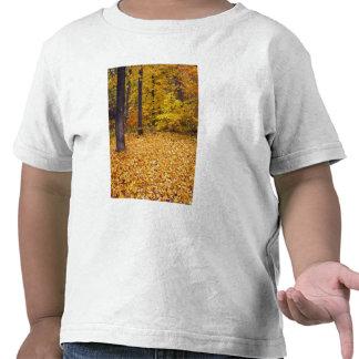 Los E.E.U.U., Missouri, el condado de Boone, Camiseta