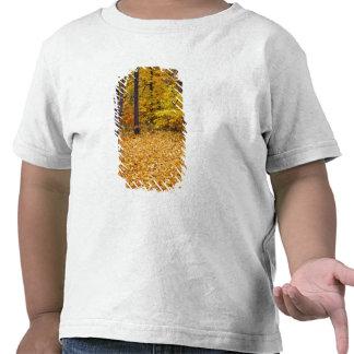 Los E.E.U.U., Missouri, el condado de Boone, Camisetas
