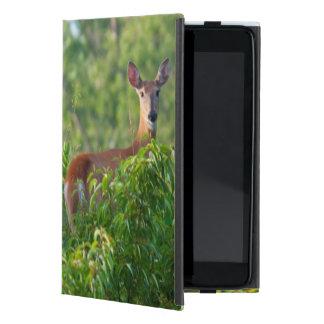 Los E.E.U.U., Nebraska, gama de la cola blanca en iPad Mini Protector