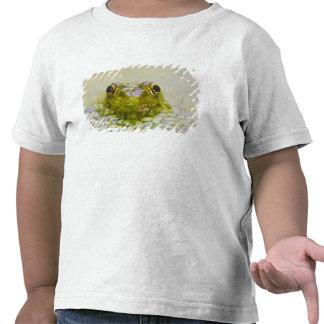 Los E.E.U.U., New Jersey, Bernardsville, Sherman Camisetas
