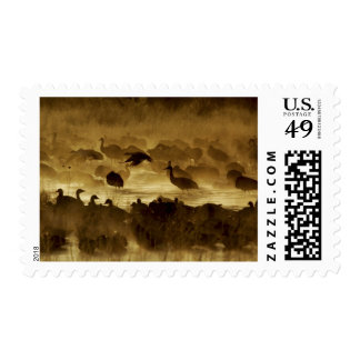 Los E.E.U.U., New México, Bosque del Apache Sellos Postales