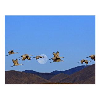 Los E.E.U.U., New México, Bosque Del Apache Tarjeta Postal