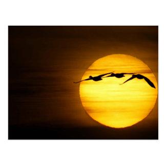 Los E.E.U.U., New México, Bosque del Apache Tarjetas Postales