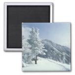 Los E.E.U.U., NH, los árboles nevados arrastran Sn Imán De Nevera