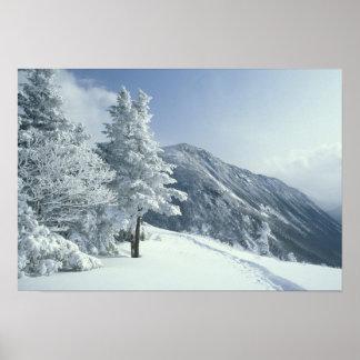 Los E.E.U.U., NH, los árboles nevados arrastran Sn Posters