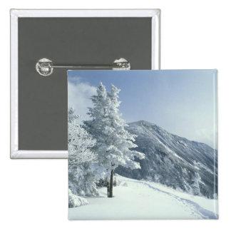 Los E.E.U.U., NH, los árboles nevados arrastran Sn Pins