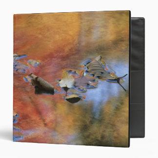 Los E.E.U.U., Nueva York, Adirondacks, hojas caida