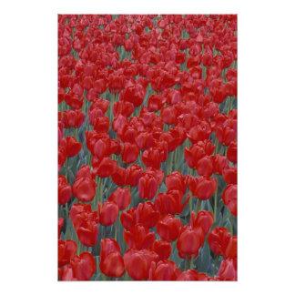 Los E.E.U.U., Ohio, Cincinnati. Cama de tulipanes  Fotografías