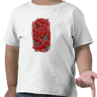 Los E.E.U.U., Ohio, Cincinnati. Cama de tulipanes Camisetas