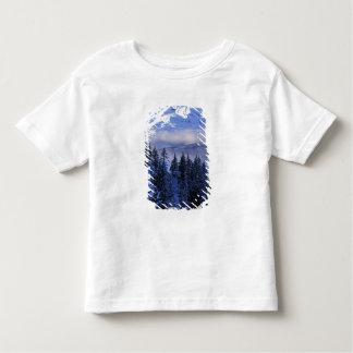 Los E.E.U.U., Oregon, bosque del Estado de Camisas