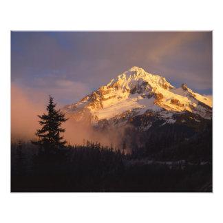 Los E.E.U.U., Oregon, bosque del Estado de la capi Cojinete