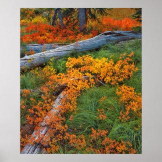 Los E.E.U.U., Oregon, bosque del Estado de Póster
