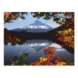 Los E.E.U.U., Oregon, bosque nacional de la capill Postales