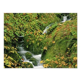Los E.E.U.U., Oregon, Brookings. Corriente verde a Cojinete