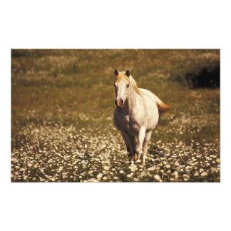 Los E.E.U.U., Oregon. Caballo en un campo de marga Impresiones Fotograficas