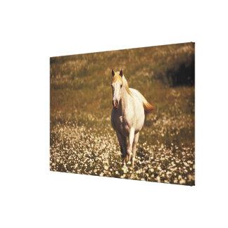 Los E.E.U.U., Oregon. Caballo en un campo de marga Impresión De Lienzo
