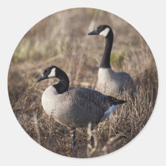 Los E.E.U.U., Oregon, fauna nacional 2 de Baskett Pegatina Redonda