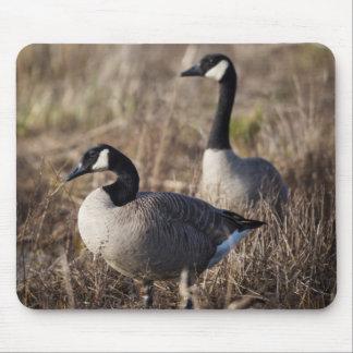 Los E.E.U.U., Oregon, fauna nacional 2 de Baskett Alfombrillas De Ratón