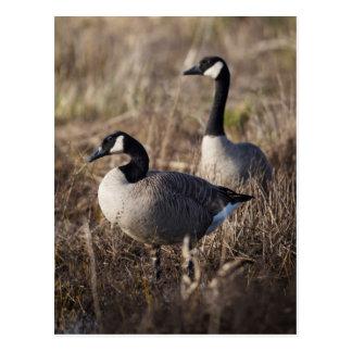 Los E.E.U.U., Oregon, fauna nacional 2 de Baskett Postales