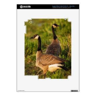 Los E.E.U.U., Oregon, fauna nacional 3 de Baskett iPad 3 Skin