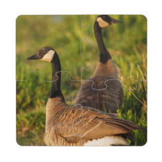 Los E.E.U.U., Oregon, fauna nacional 3 de Baskett Posavasos De Puzzle