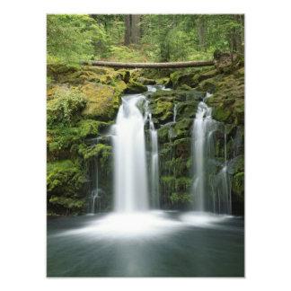 Los E.E.U.U., Oregon, gama de la cascada, nacional Cojinete